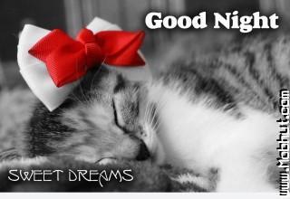 Good night kitty hd wallpaper