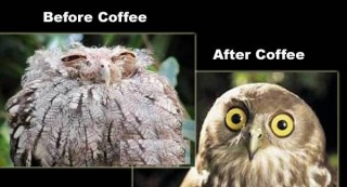 Coffee jokes funny photo