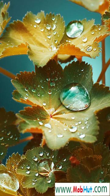 Drops (1)