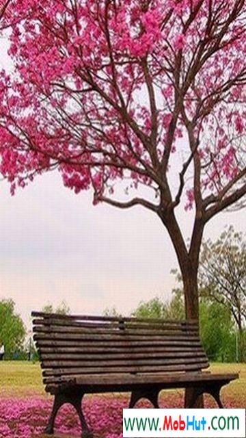 Pink park