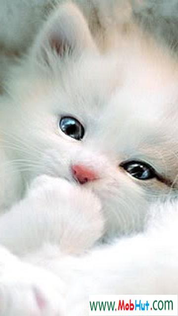 Cute kitty1