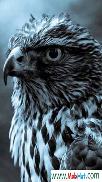 Hd eagle