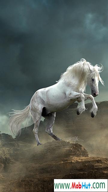 Hd horse