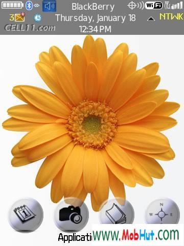 Sun flower theme